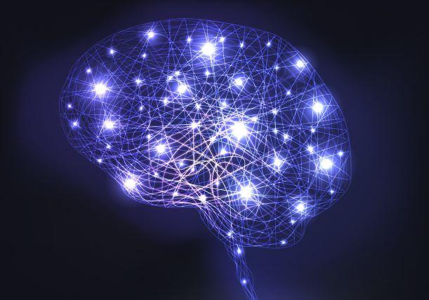connexions_cerebrales